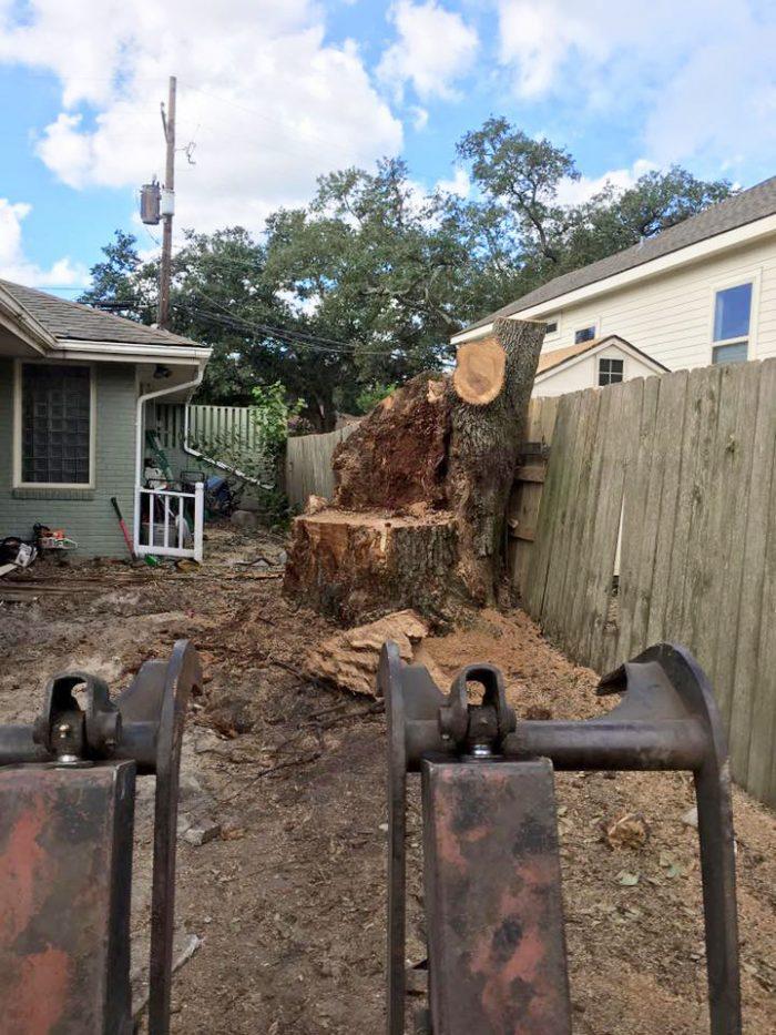stump6